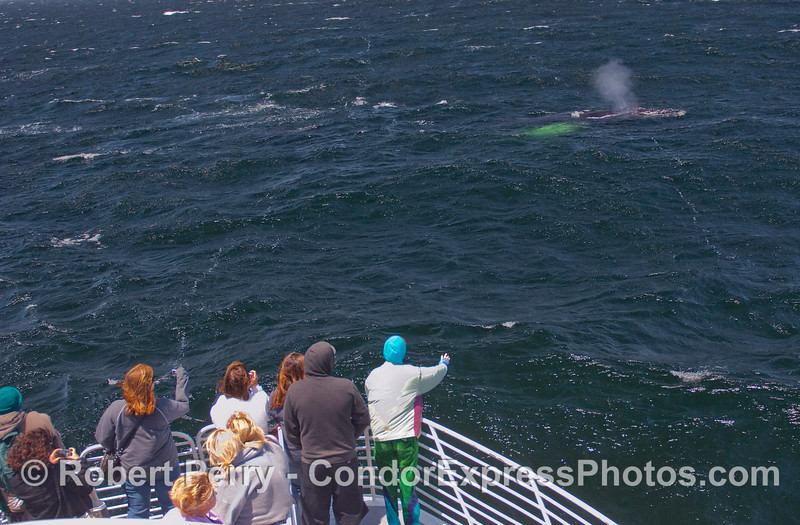 Whalers on board the Condor Express get a friendly visit from a Humpback.