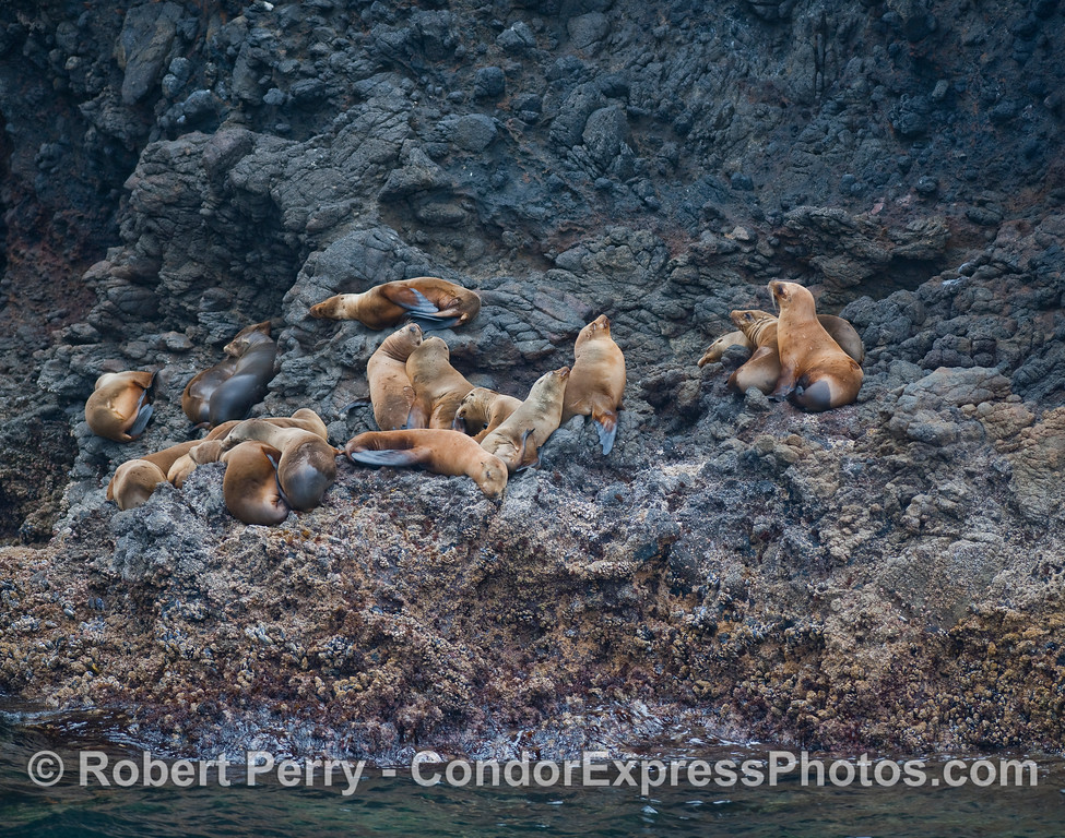 Sea lions on the rocks - Santa Cruz Island.