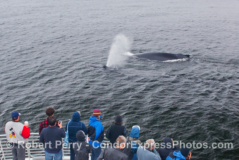 And then they saw TWO Humpbacks.