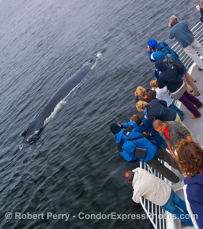 A large Humpback come in for a visit.