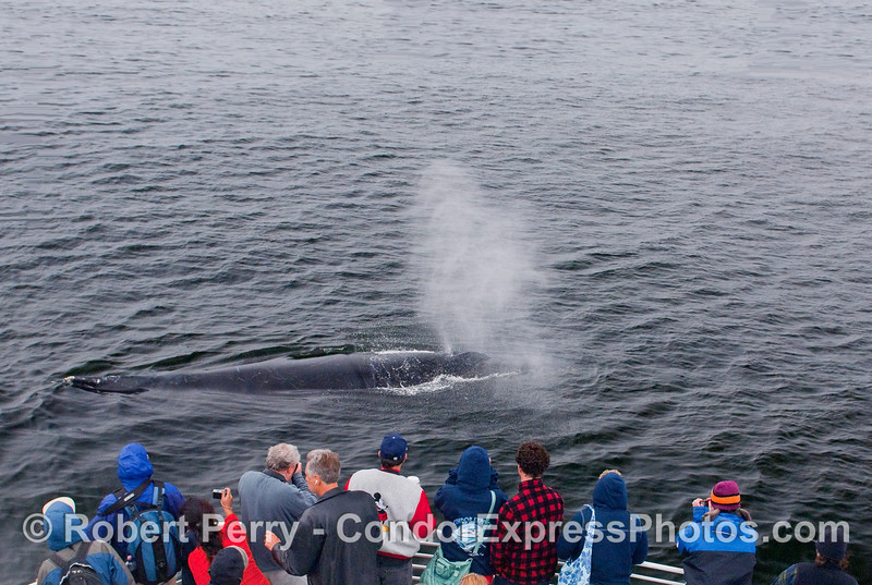 These lucky whalers get sprayed by a friendly Humpback.