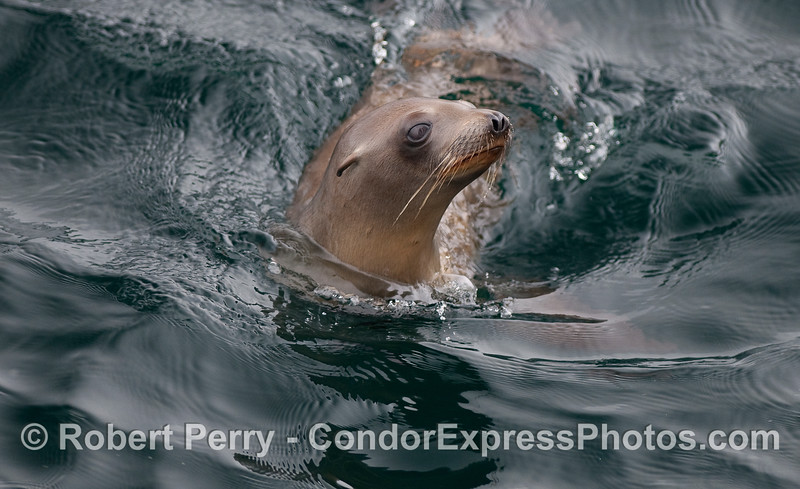 A curious sea lion pup takes a peek at the whalers on board the Condor Express.