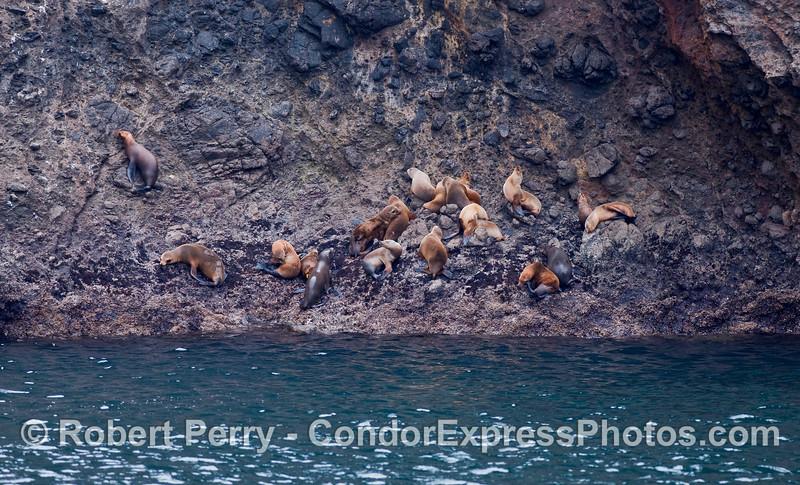 Sea lions on the rocks - Santa Cruz Island.