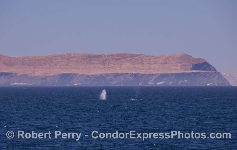 The West End of Santa Cruz Island and a Humpback spout.