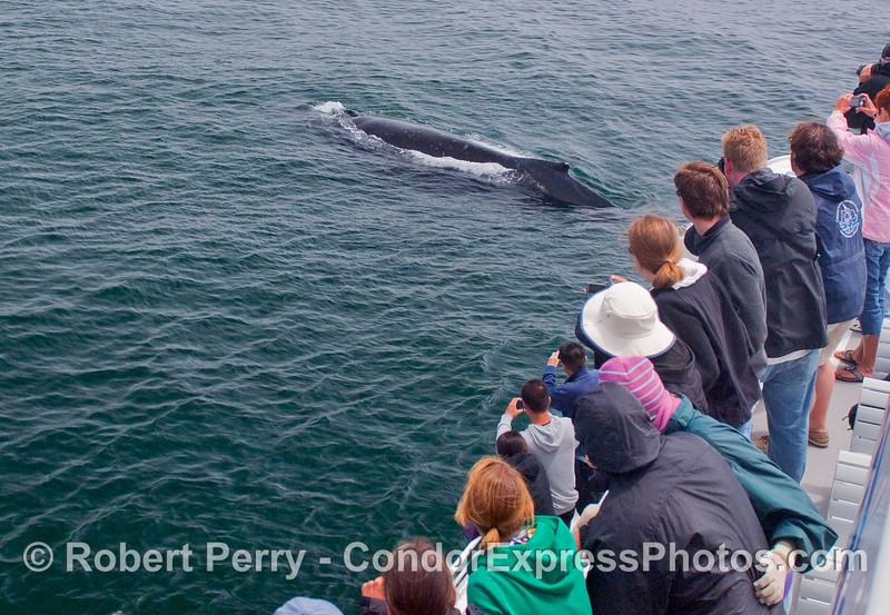 A friendly Humpback Whale.