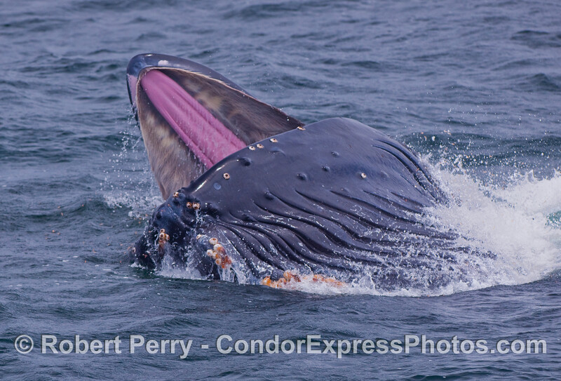 Image 1 of 2:  Who can question that these leviathans are among the largest carnivores on the planet?