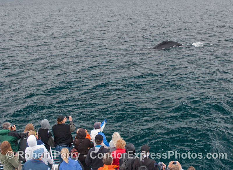 Another close approach by a Humpback Whale.