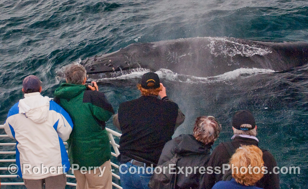 Ready, aim, shoot!  An extremely friendly approach by a full grown Humpback Whale.
