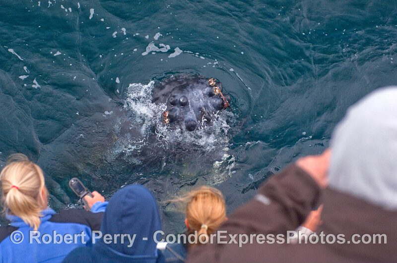 An extreme encounter of the Humpback kind.