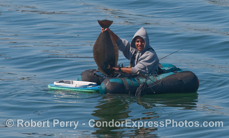 Tube fisherman in the Harbor shows off his California Halibut (Paralichthyes californicus).