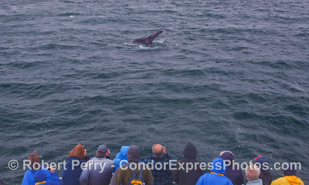 Whalers enjoy a nearby Humpback tail fluke.