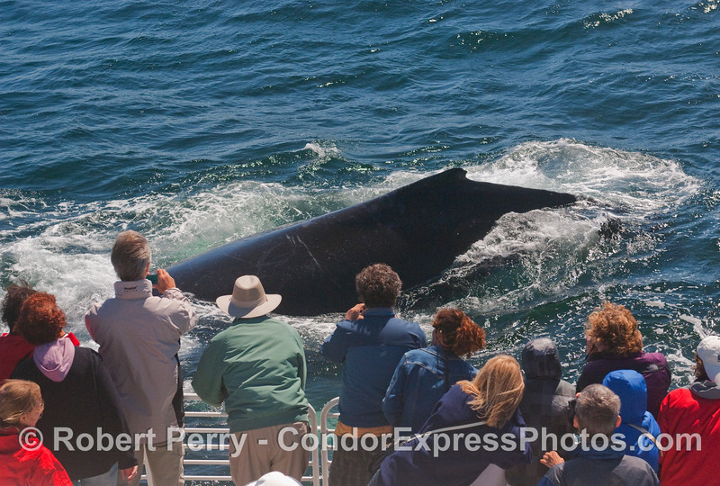 Another very friendly approach by a mighty Humpback Whale.