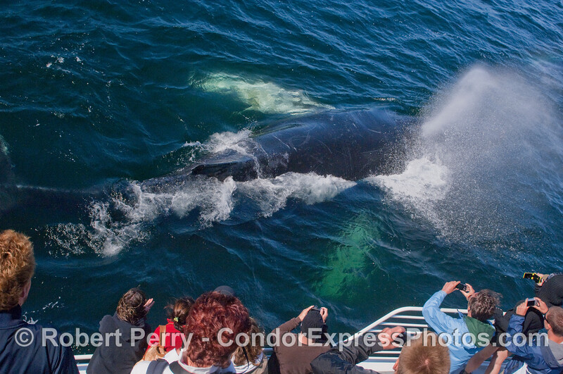 Whalers get blasted by a friendly Humpback.
