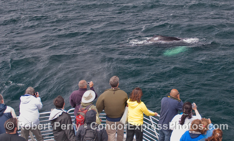 A Humpback Whale comes in for a friendly visit.