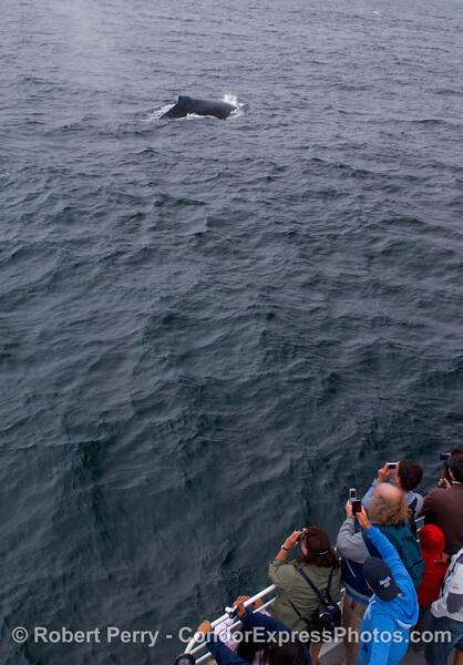 Whalers shoot a Humpback Whale.