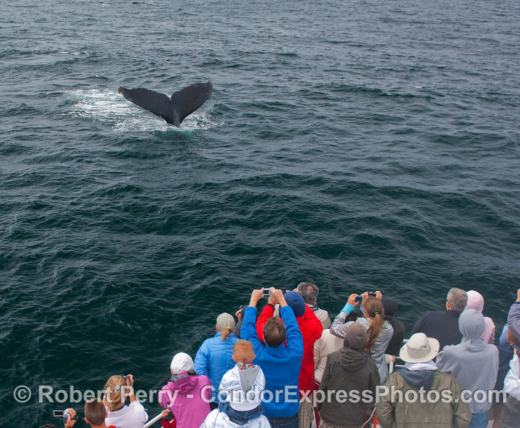 Whalers get a great view of a Humpback Whale tail fluke.