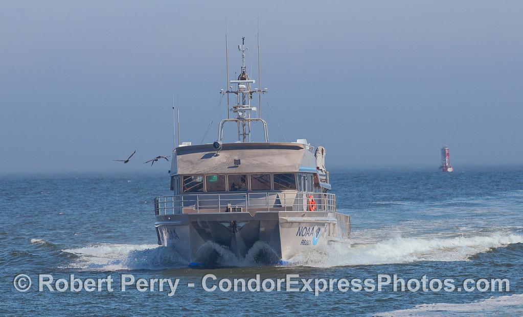 The NOAA research vessel Shearwater rides its twin aluminum hulls into Santa Barbara Harbor.