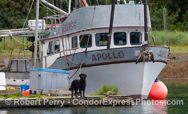 """This is Lacy the dog on the end of her dock which is inside a completely secluded lagoon on Inian Island....the rest of these Alaska images are filed under """"Recent Trips"""" at  <a href=""""http://www.MarineBioPhotography.com"""">http://www.MarineBioPhotography.com</a>"""