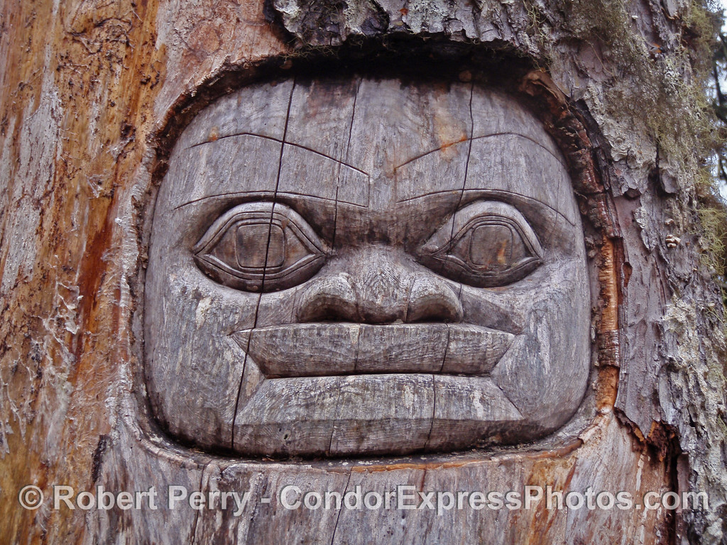 "A Tlingit image carved in a spruce tree trunk....the rest of these Alaska photos are filed under ""Recent Trips"" at www.MarineBioPhotography.com"