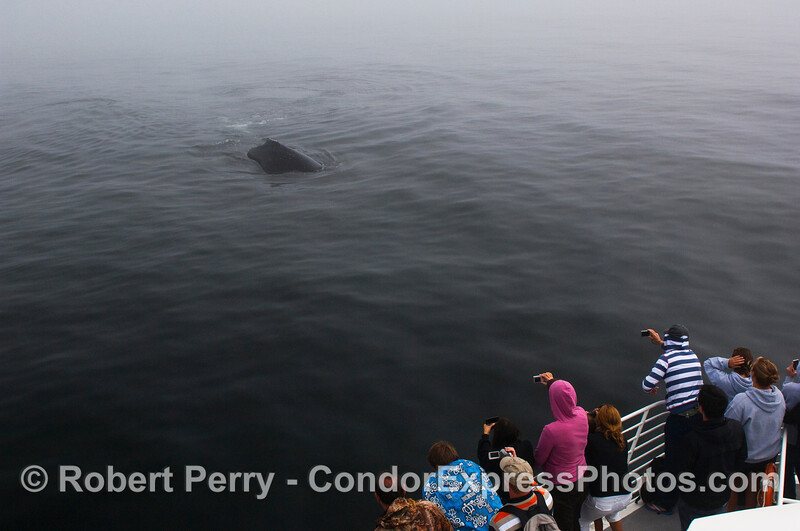 The whalers on board the Condor Express get a chance to shoot a friendly Humpback Whale.