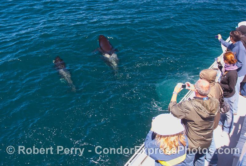 Orcinus orca & passengers 2010 09-09 SB Channel b - 087