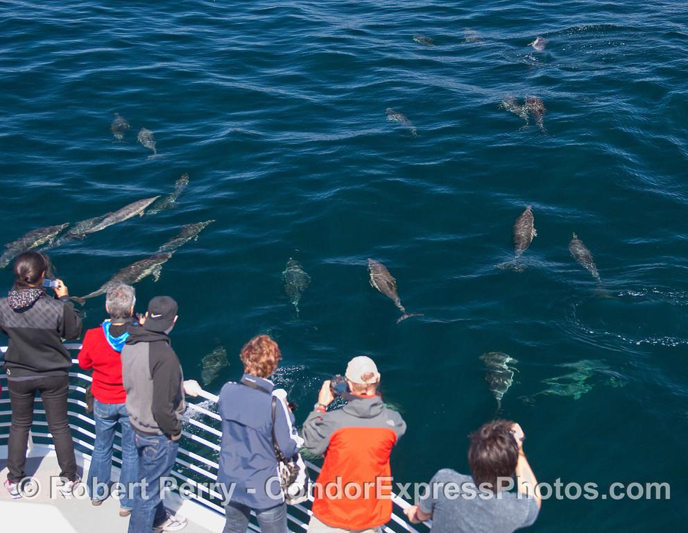Delphinus capensis & passengers 2010 10-02 SB Channel a - 013