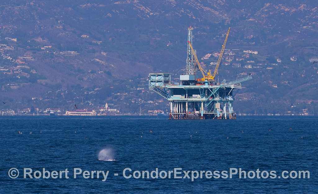An oil platform with a Humpback Whale spout.