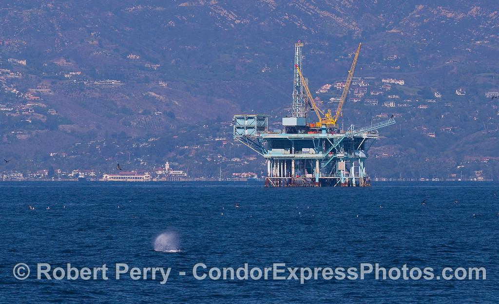 An oil platform with a Humpback Whale spout.