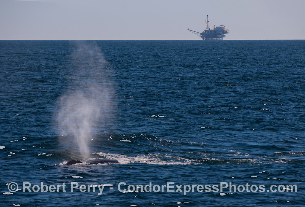 Oil Platform and Humpback.