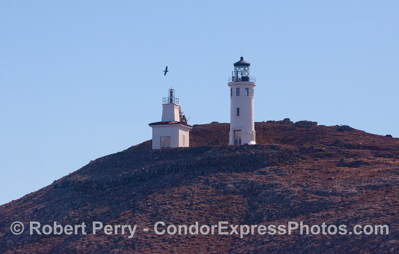 Anacapa Light from the north, looking south with Brown Pelican soaring.