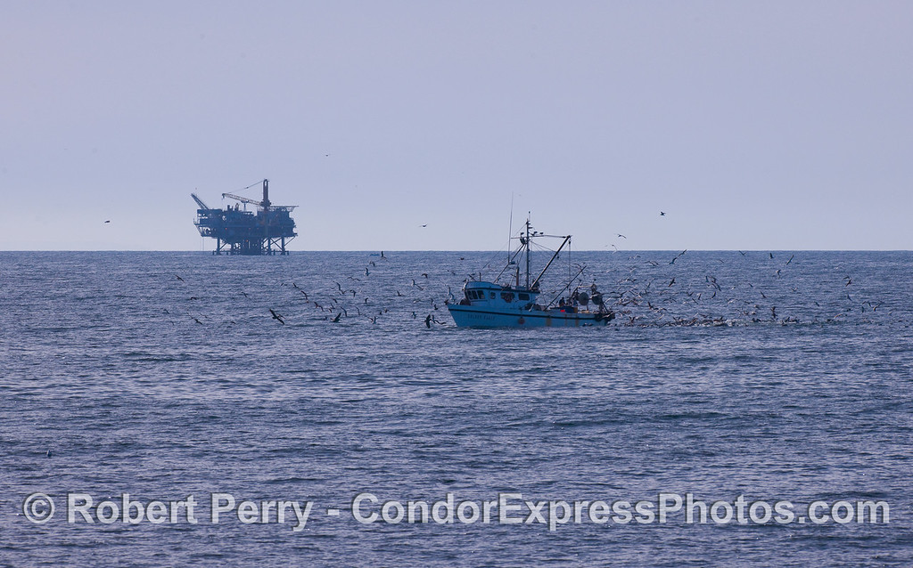 Commercial fishing vessel 'Golden Eagle' with Platform Habitat in back.