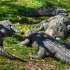 The gators were catching a few zzz's.