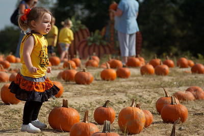 Look at all those pumpkins!