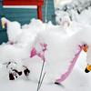 Frosty Flamingos