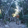 hiking the arroyo over to Puerto Salinas