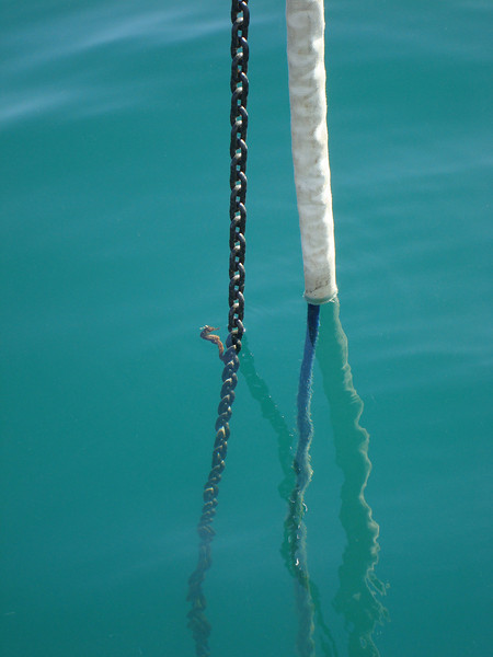 Sea horse on our anchor chain!
