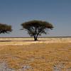 Somewhere in the Kalahari desert