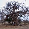 The first Baobop tree that we came across - these trees are true giants and the largest on the African continent. I am not fast enough for my camera shutter...time to get into shape