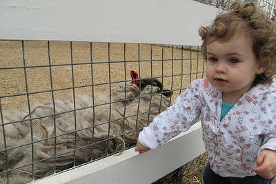 """Farm Babies"" petting zoo"