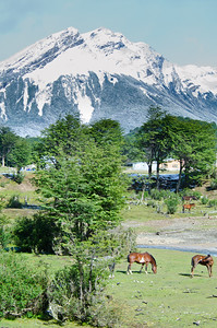 Mountains and horses on the way to Tierra del Fuego.