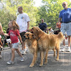 They're off: Hundreds of dogs lead the parade around Deming Park during the annual Bark in the Park event.