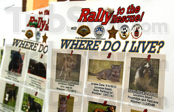 Found: Alexus  Soliday's Obadiah is pictured as #3 in this Rally to the Rescue flyer posted in the Terre Town Elementary School teachers' lounge.