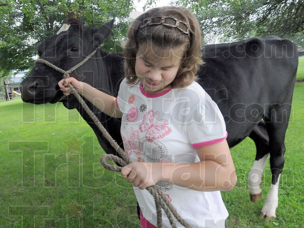 Handful: Jodi Jones leads an 800 pound animal with a rope and determination Saturday afternoon at her Marshall, Indiana family farm.
