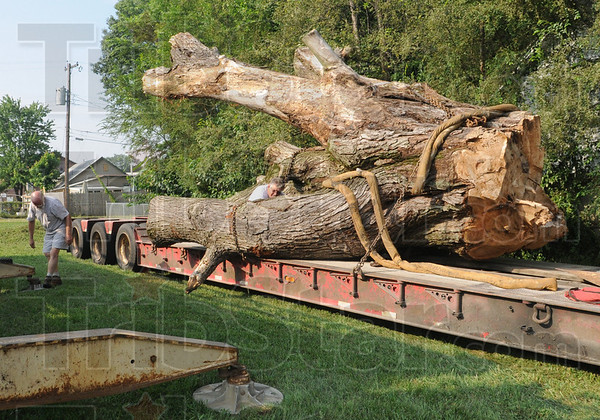 Stump removal: A moving crew prepares a huge tree stump for removal from a flat bed trailer to the grounds of Atlantis Tuesday morning.