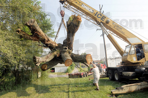 Heavy lift: A crane operator sets a giant Maple tree stump onto the grounds of Atlantis on north 13th Street Tuesday morning.