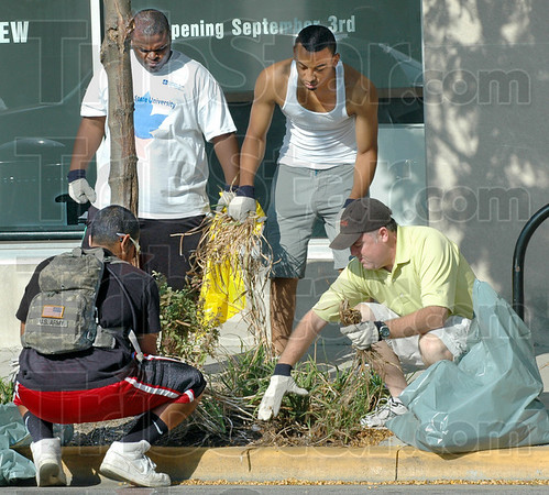 Weeds: Indiana State University students Duane Bean, Rory Calhoun and Darrell McCoy work with Union Hospital representative Brendan Kearns (R) cleaning weeds from a flower bed on south 7th street near Ohio Tuesday morning.