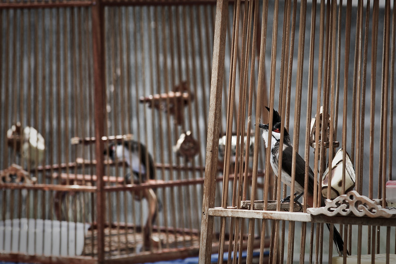 Caged birds hang alongside the roads throughout most of the entire country.