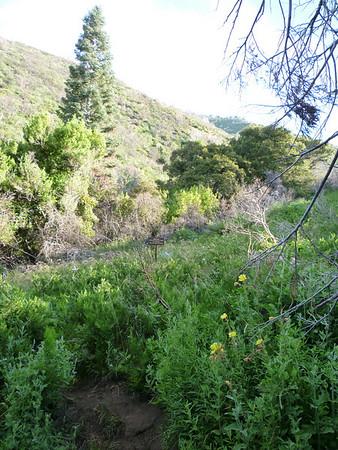 Baldy 6-Peak Loop 8-1-2010