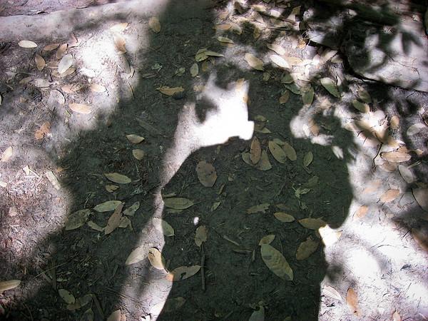 Gnarly shadows