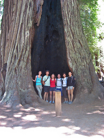 The Big Basin hiking crew in front of the giant ass Redwood tree